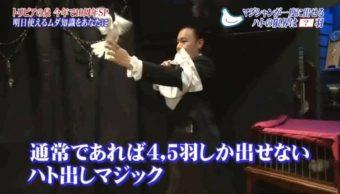 フジテレビ「トリビアの泉」にてマジシャンが鳩だしマジックで出演画像